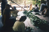 Women cleaning leaves for Daime tea